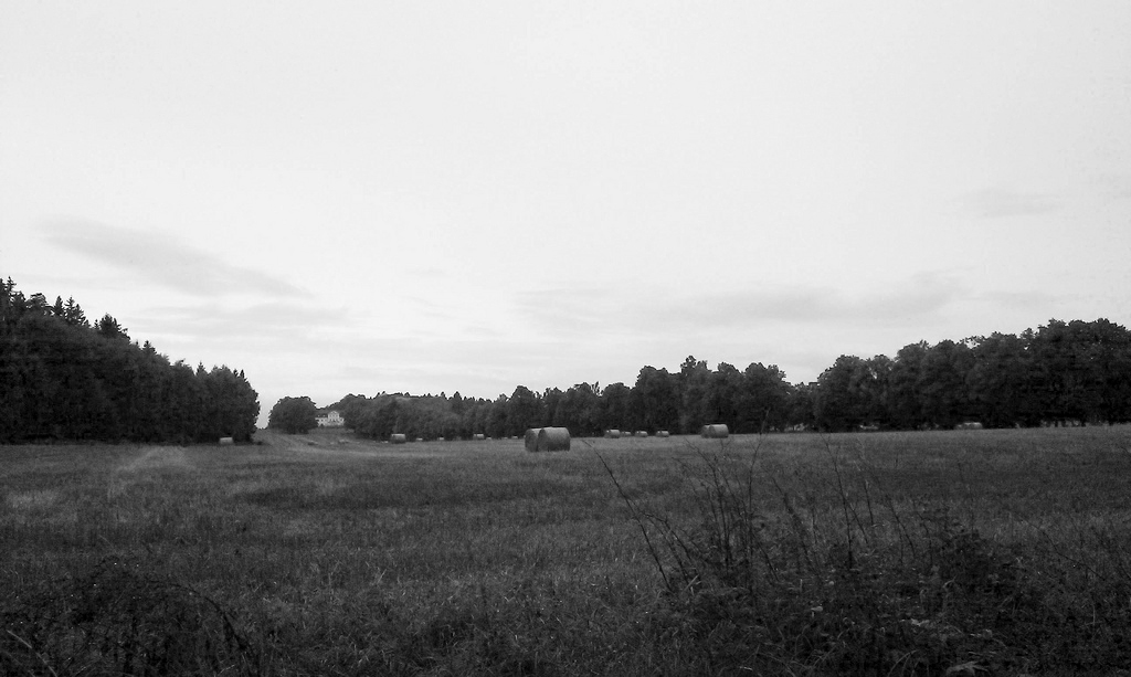 fields_bw